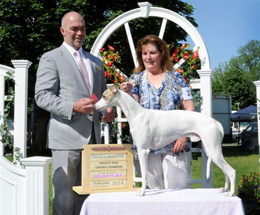 Whippet dog Breeders in ontario